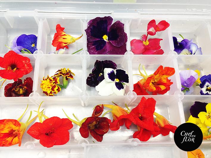 Flores Comestibles Una Tendencia Floreciente